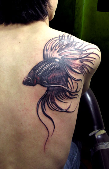 Large and famous Betta fish tattoo also called Siamese fighting fish tattoo on man's shoulder blade.